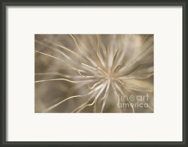 Inside Framed Print By Anne Gilbert