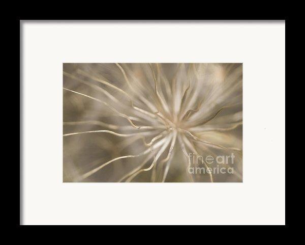 Inside Framed Print By Anne Gilbert