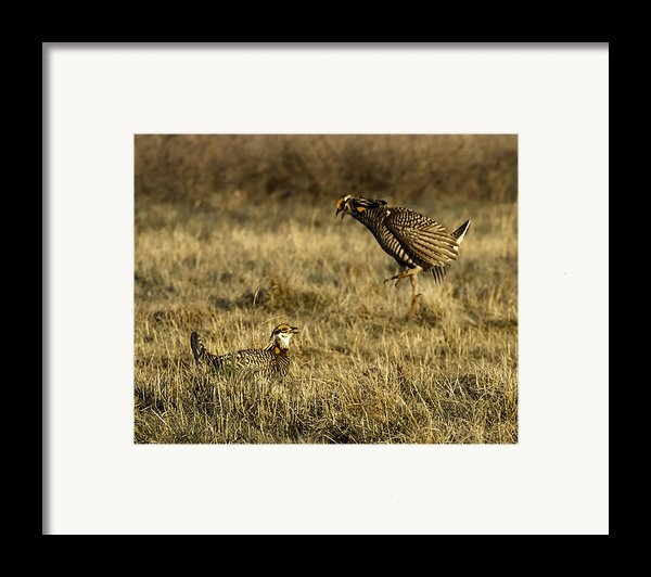 Intimidating Jump Framed Print By Thomas Young