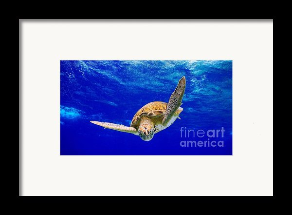 Into The Blue Framed Print By Isabelle Kuehn