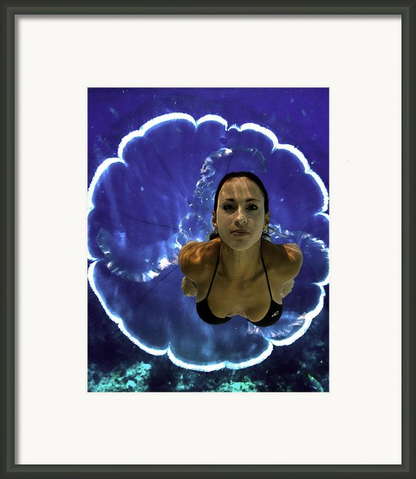 Into The Blue Framed Print By Paula Porterfield-izzo