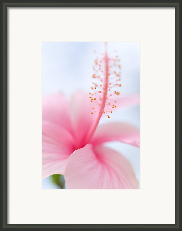 Invitation Into The Light Framed Print By Jenny Rainbow