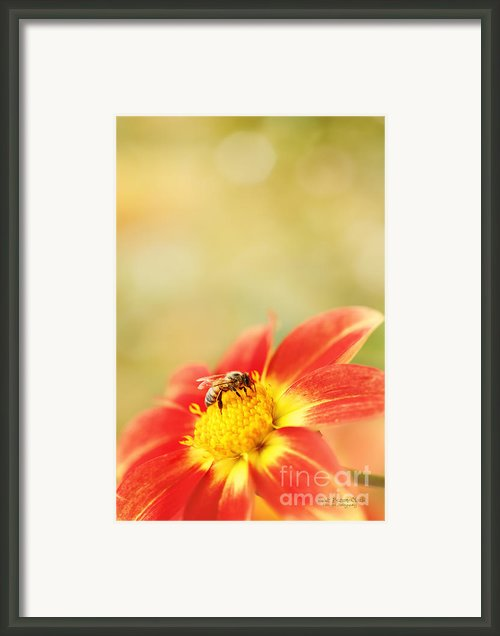 Inviting Framed Print By Reflective Moments  Photography And Digital Art Images