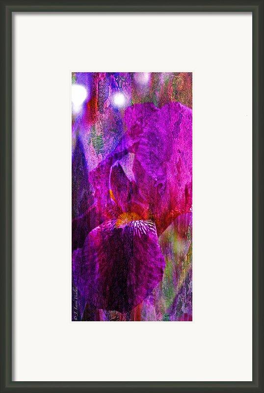 Iris Abstract Framed Print By J Larry Walker
