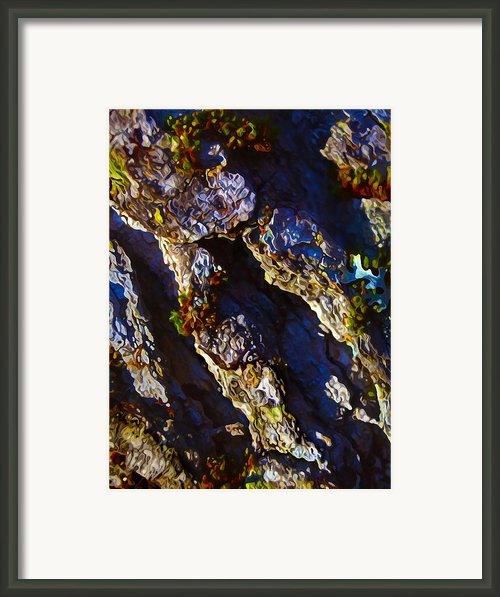 Ironwood Bark With Moss Framed Print By Abeautifulsky  Photography
