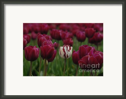 It Is Beautiful Being Different Framed Print By Bob Christopher