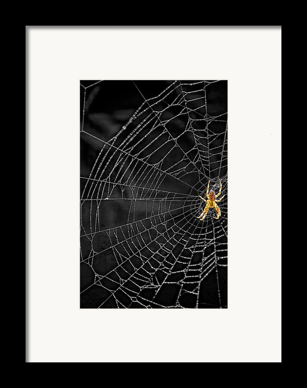 Itsy Bitsy Spider My Ass 3 Framed Print By Steve Harrington