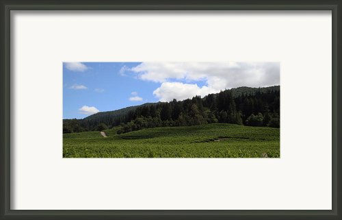 Jack London Vineyard Framed Print By Lucy Basch