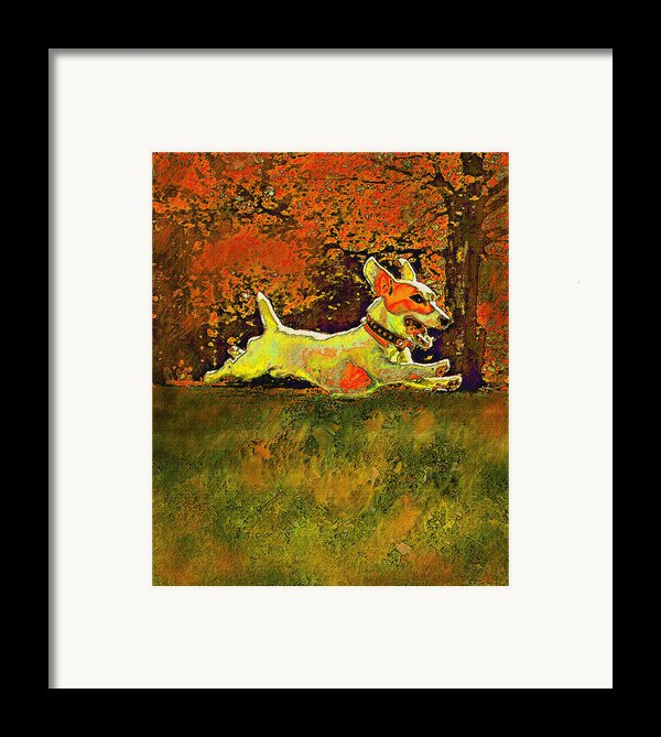 Jack Russell In Autumn Framed Print By Jane Schnetlage