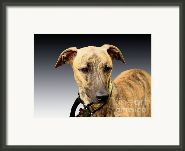 Jake Framed Print By Linsey Williams