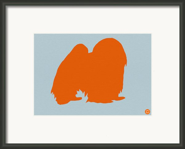 Japanese Chin Orange Framed Print By Irina  March