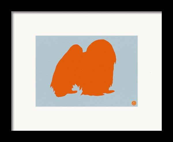Japanese Chin Orange Framed Print By Naxart Studio