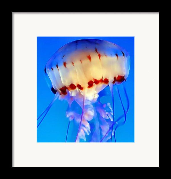 Jellyfish 3 Framed Print By Dawn Eshelman