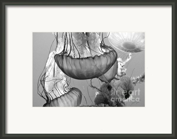 Jellyfish Floating By Framed Print By Artist And Photographer Laura Wrede