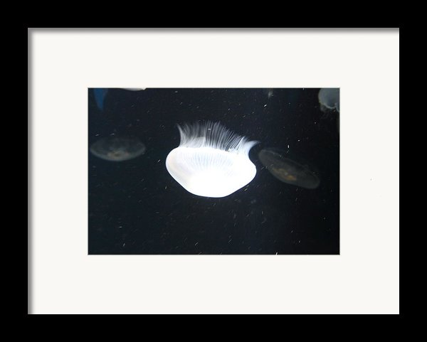 Jellyfish - National Aquarium In Baltimore Md - 121222 Framed Print By Dc Photographer