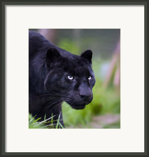 Jet Framed Print By Valerie Anne Kelly