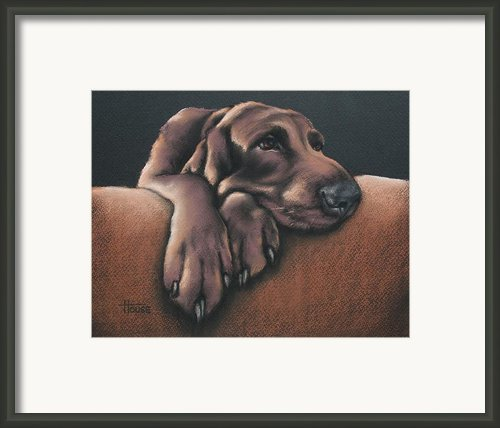 Jethro Framed Print By Cynthia House