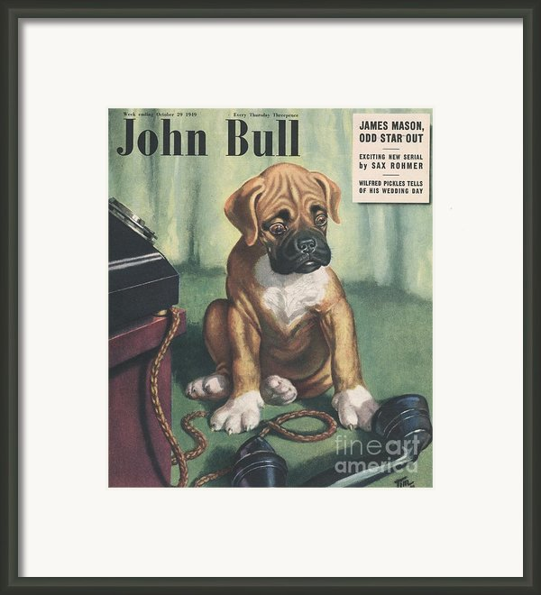 John Bull 1949 1940s Uk Dogs  Magazines Framed Print By The Advertising Archives