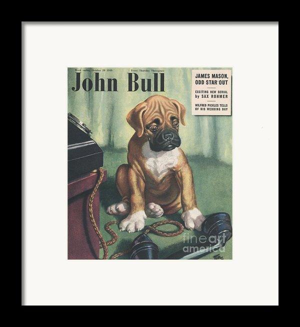 John Bull 1949 1940s Uk Dogs  Magazines Framed Print By The Advertising Archives