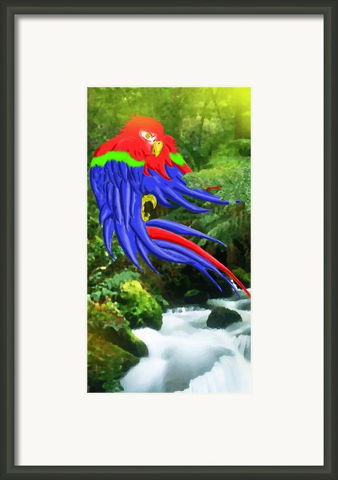 Jungle Quaker Framed Print By John Kreiter