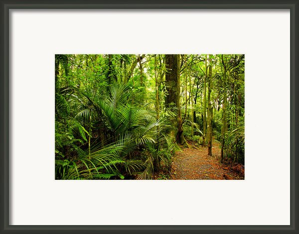 Jungle Scene Framed Print By Les Cunliffe