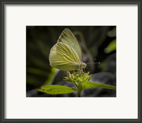 Just A Taste Framed Print By Jean Noren