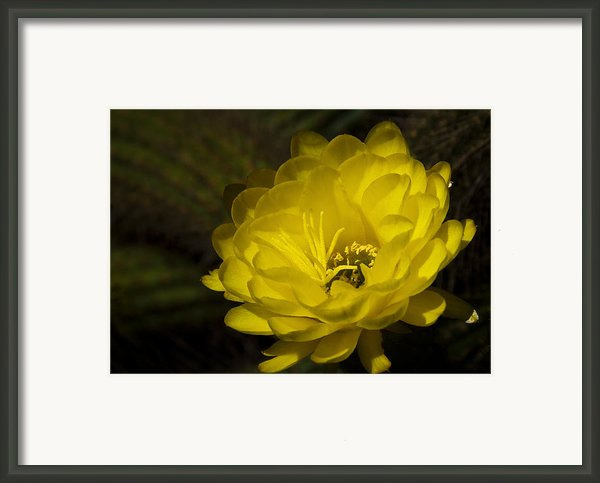 Just Call Me Mellow Yellow  Framed Print By Saija  Lehtonen