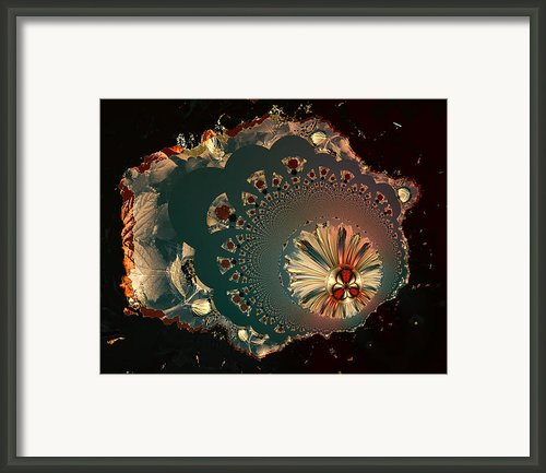 Just Hibernating Framed Print By Claude Mccoy