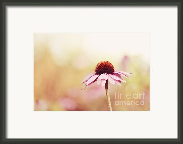 Just Peachy Framed Print By Reflective Moments  Photography And Digital Art Images