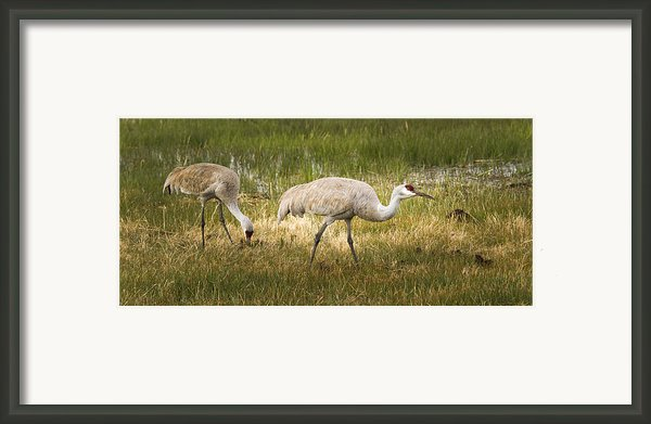Just Poking Around Framed Print By Jean Noren