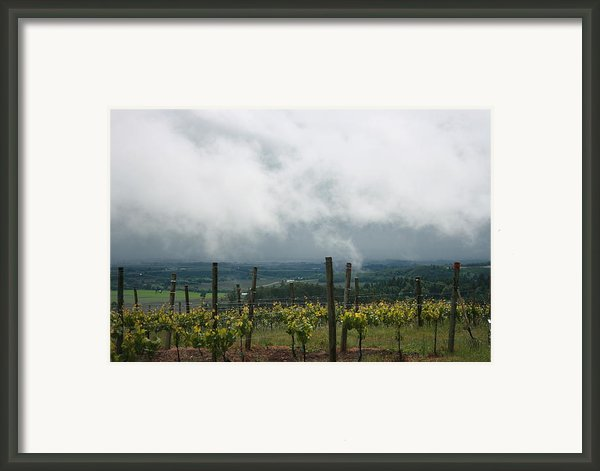 Jw Vineyards Framed Print By Michelle Densmore