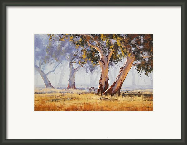 Kangaroo Grazing Framed Print By Graham Gercken