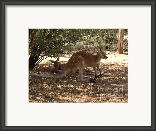Kangaroos In The Shade Framed Print By Janet Watson
