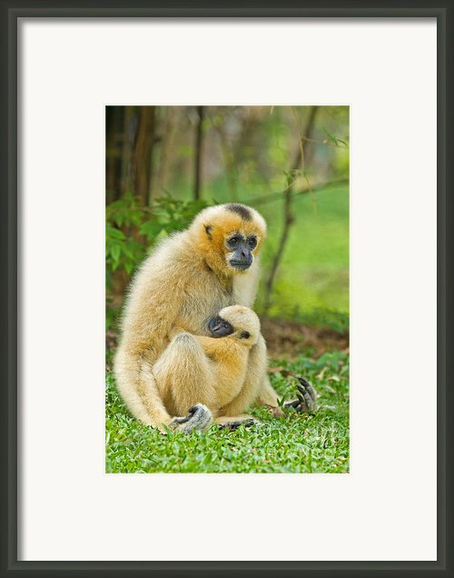 Karmic Bond Framed Print By Ashley Vincent