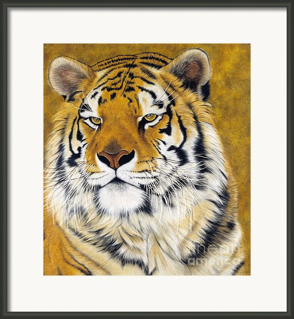 Kato Framed Print By Lawrence Supino