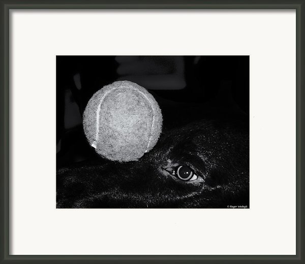 Keep Your Eye On The Ball Framed Print By Roger Wedegis
