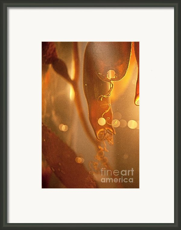 Kelp And Shark Eggs Sea Creature Pictures Framed Print By Artist And Photographer Laura Wrede