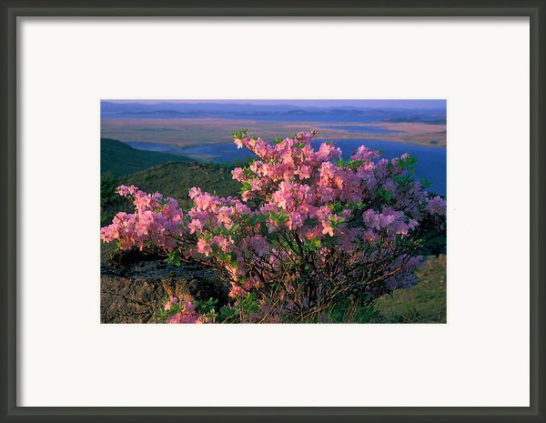 Khasanskiy Nature Park Framed Print By Anonymous