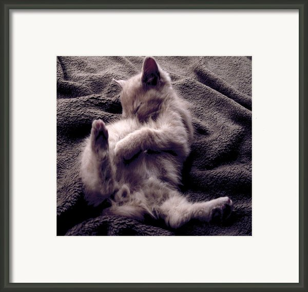 Kitten Framed Print By Linda Billege