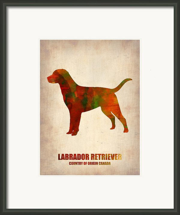 Labrador Retriever Poster Framed Print By Irina  March