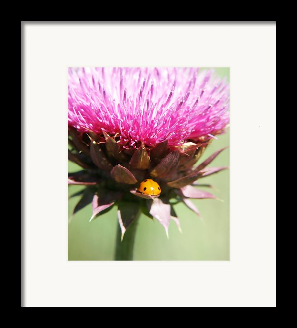 Ladybug And Thistle Framed Print By Marilyn Hunt