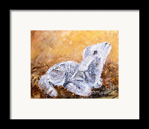 Lamb  Framed Print By Amanda Dinan