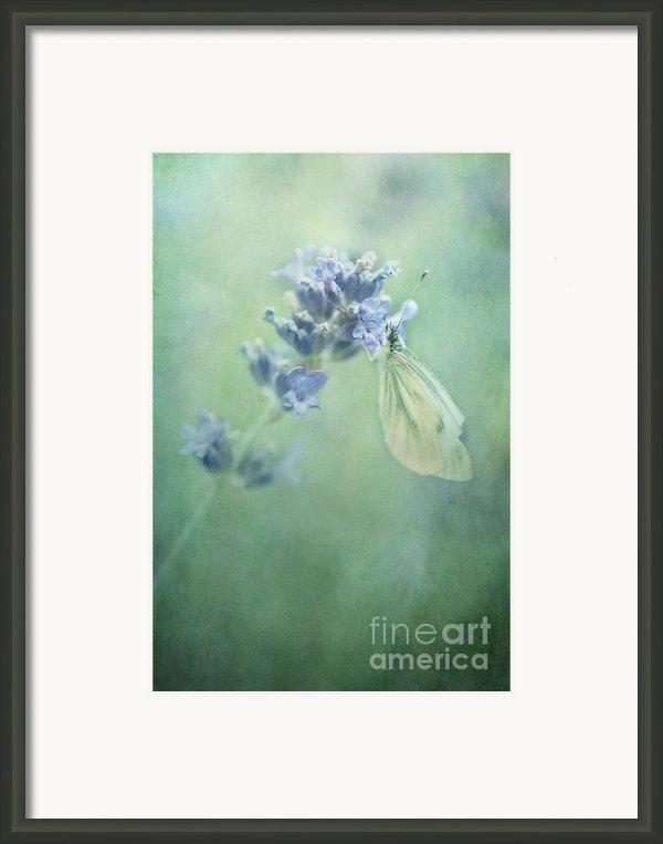 Land Of Milk And Honey Framed Print By Priska Wettstein