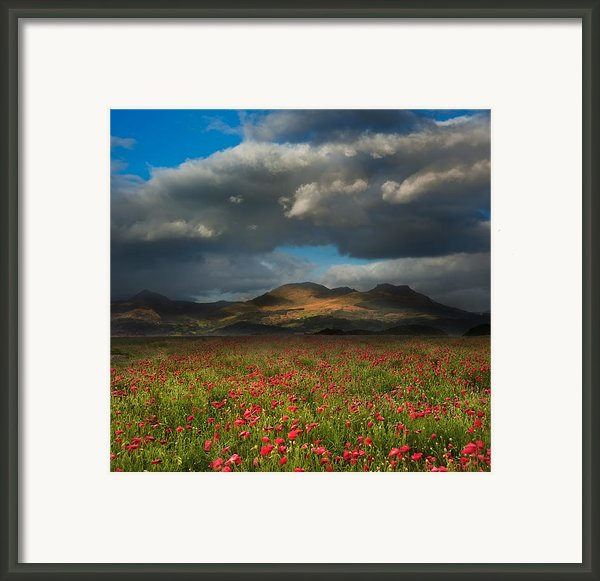 Landscape Of Poppy Fields In Front Of Mountain Range With Dramat Framed Print By Matthew Gibson
