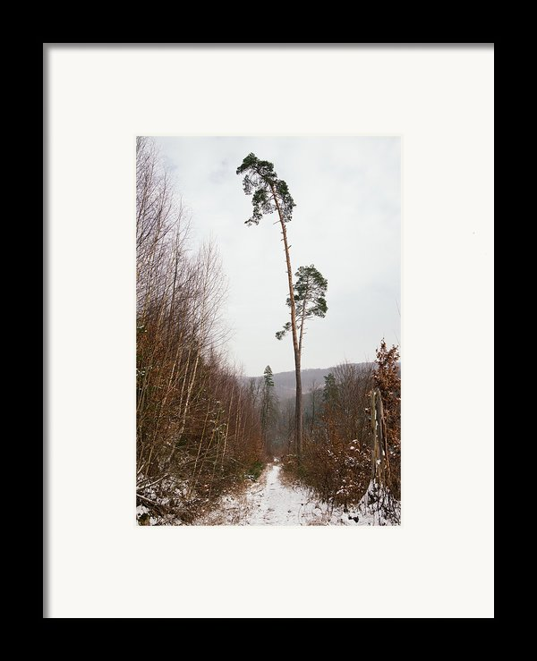 Large Trees In The Nature Park In Winter Framed Print By Matthias Hauser