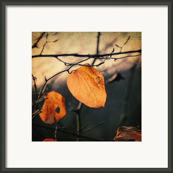 Last Leaves Framed Print By Taylan Soyturk