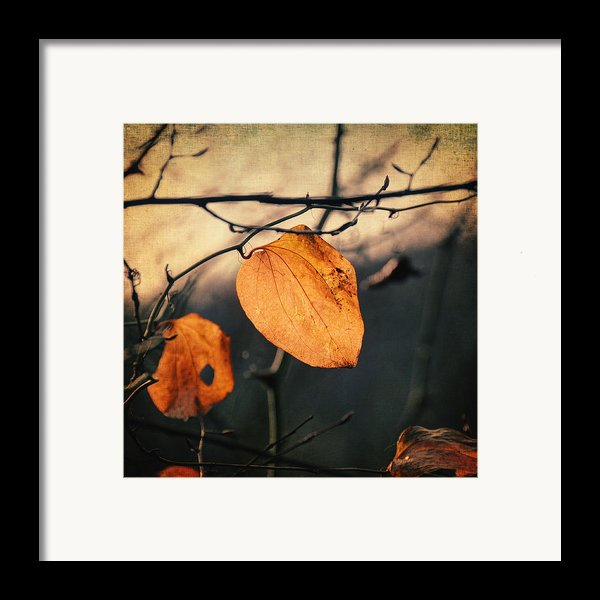 Last Leaves Framed Print By Taylan Soyturk