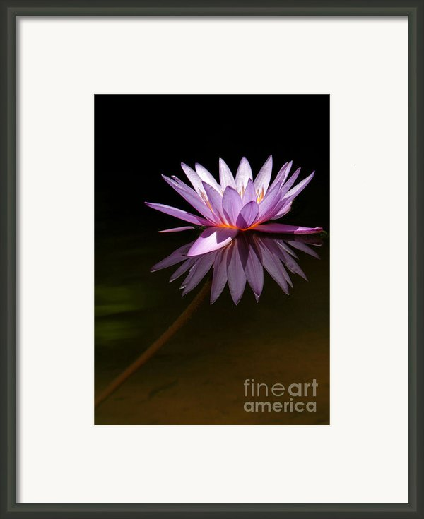Lavendar Reflections Framed Print By Sabrina L Ryan