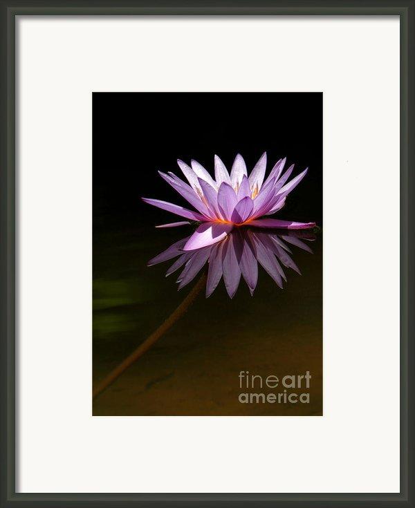 Lavendar Reflections Framed Print By Sabrina L Ryan