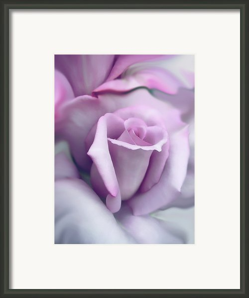 Lavender Rose Flower Portrait Framed Print By Jennie Marie Schell